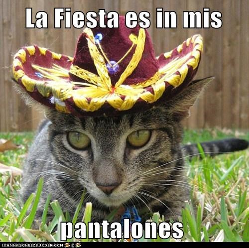 caption captioned cat costume dressed up fiesta hat location pants Party translation