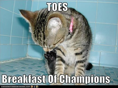 breakfast champions classics cleaning eating feets toes - 5524069888