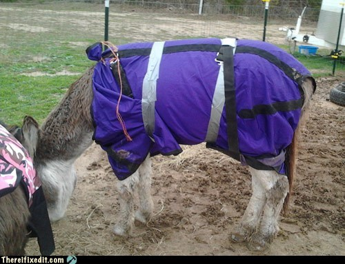 blanket,donkey,duct tape,livestock,twine