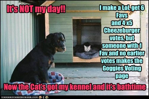It's NOT my day!! I make a Lol, get 6 Favs and 4 x5 Cheezeburger votes, but someone with 1 Fav and no earlier votes makes the Goggies Voting page Now the Cat's got my kennel and it's bathtime