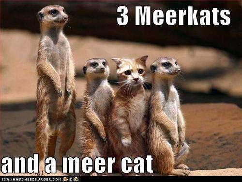 3 Meerkats