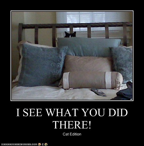 I SEE WHAT YOU DID THERE! Cat Edition