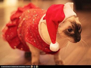 around the interwebs christmas costume holidays people pets santa claus santa hats - 5525773568