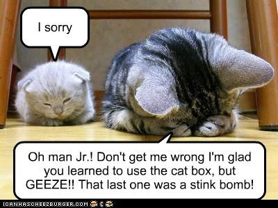 Oh man Jr.! Don't get me wrong I'm glad you learned to use the cat box, but GEEZE!! That last one was a stink bomb!