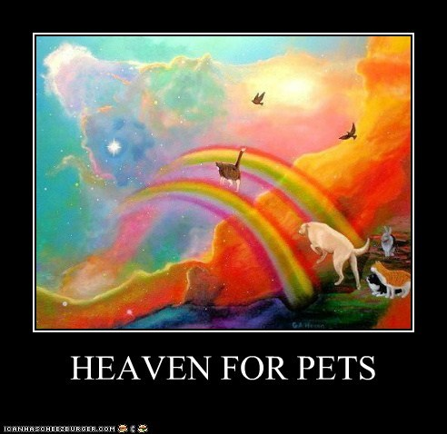 HEAVEN FOR PETS
