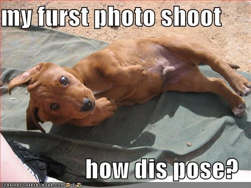 beach dachshund puppy sunbathing - 552619776