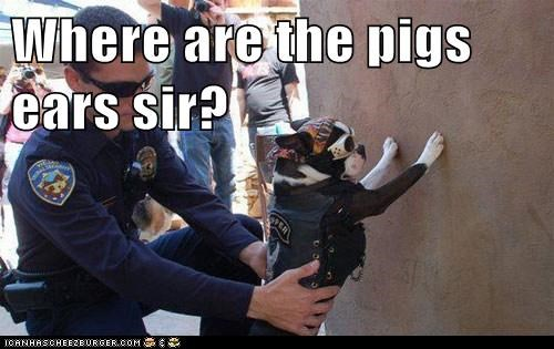 Where are the pigs ears sir?