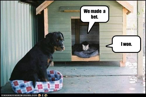 bed bet caption captioned cat dogs house made victory we winner won - 5526735872