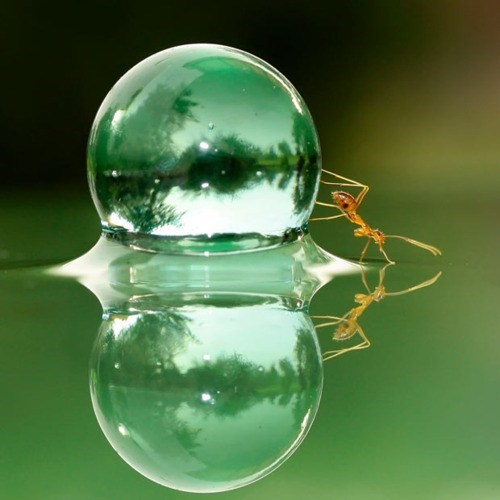 acting like animals ant attempting bubble burst confused difference failing illusion marble pushing size trying