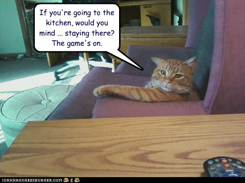 caption captioned cat conditional game going if kitchen lazy on request stay tabby TO - 5527209984