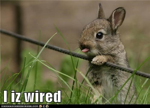 best of week,bunny,cute animals,derp,Wired