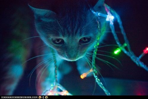 advent calendar,christmas,christmas lights,cyoot kitteh of teh day,glow,holidays,lights,the 25 days of catmas
