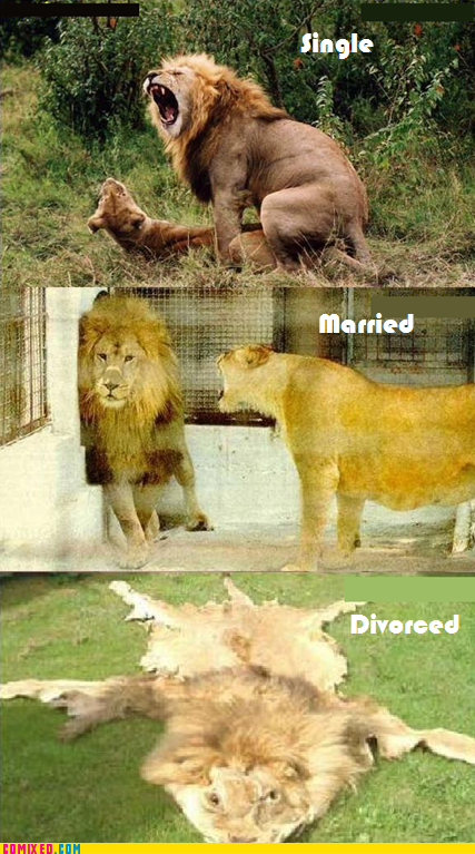 best of week divorced lions man married relationship single the internets - 5528138240