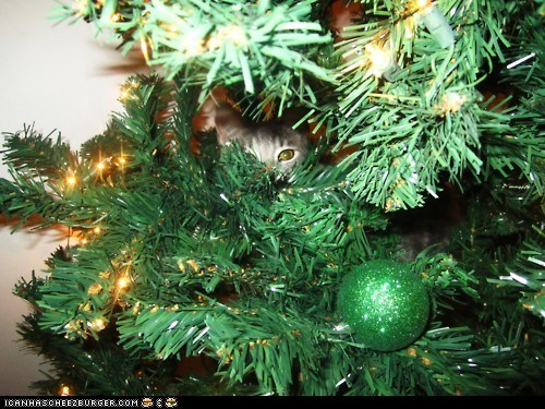 advent calendar christmas christmas tree cyoot kitteh of teh day destruction hiding holidays ornaments the 25 days of catmas - 5528174080