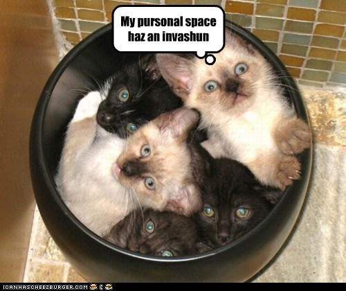 caption captioned cat Cats cramped do not want has invasion kitten my personal space - 5528185600