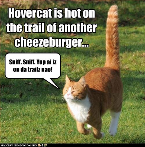 Cheezburger Image 5528295680