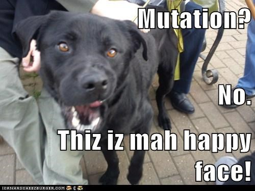 Black Lab happy happy face labrador retriever mutation smile - 5528413440