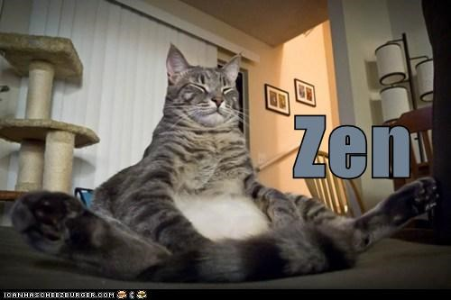 best of the week buddhism caption captioned cat Hall of Fame meditating peace sitting zen - 5528688640