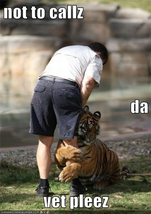 animals,best of the week,Hall of Fame,hug,no vet,tiger,zoo keeper