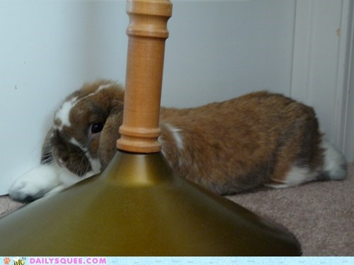 bunny doing it wrong FAIL happy bunday hiding rabbit reader squees - 5529060864