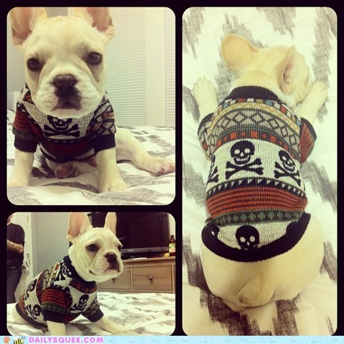 acting like animals,amazing,crossbones,custom,dogs,fitted,french bulldogs,pattern,puppy,skull,sweater,the best