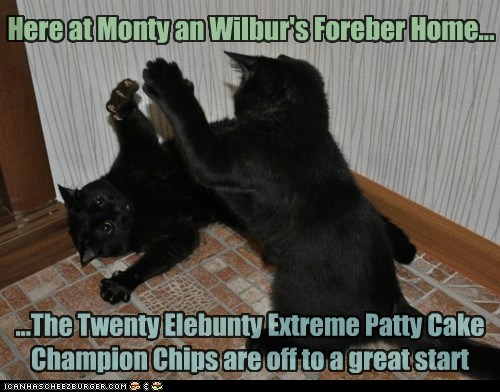 Here at Monty an Wilbur's Foreber Home... ...The Twenty Elebunty Extreme Patty Cake Champion Chips are off to a great start