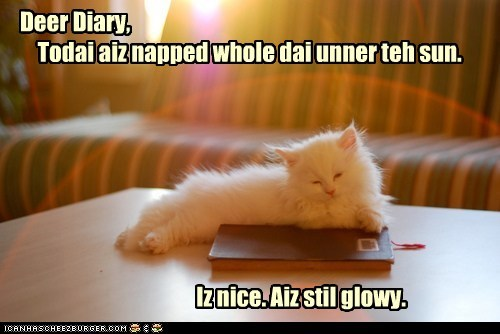 Deer Diary, Todai aiz napped whole dai unner teh sun. Iz nice. Aiz stil glowy.