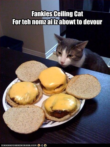 Cheezburger Image 5529955584