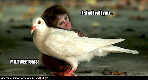 adorbz,best of the week,dove,friends,friendship,Hall of Fame,interspecies friendship,love,monkey,mr-tweetums