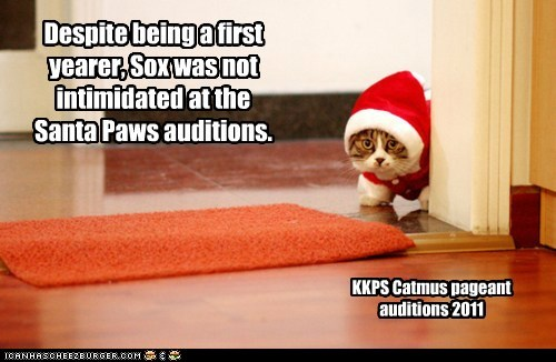 Despite being a first yearer, Sox was not intimidated at the Santa Paws auditions. KKPS Catmus pageant auditions 2011