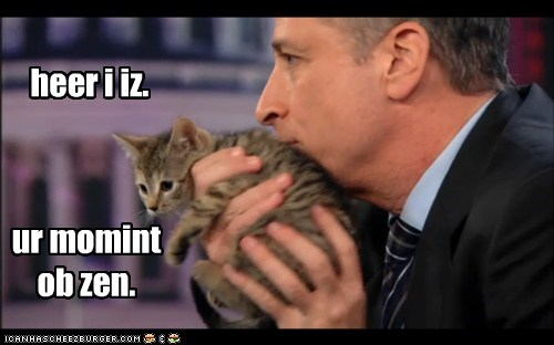 best of the week caption captioned cat Hall of Fame jon stewart kitten moment moment of zen segment the daily show your zen - 5530232832