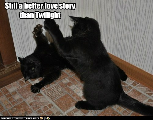 better caption captioned cat Cats comparison fighting love still story twilight - 5530528000