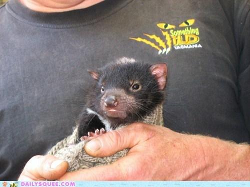 baby blanket cuddling fuzzy happy Joey snug squee spree swaddled Tasmanian Devil warm - 5530747392