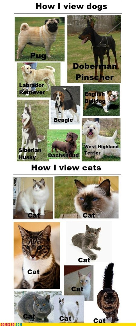 animals best of week breeds Cats dogs