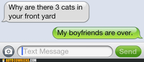 cat,cat lady,Cats,dating,forever alone,relationships