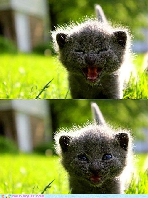 adorable baby cat gesture Hall of Fame happy kitten smile smiling unbearably squee - 5531266560