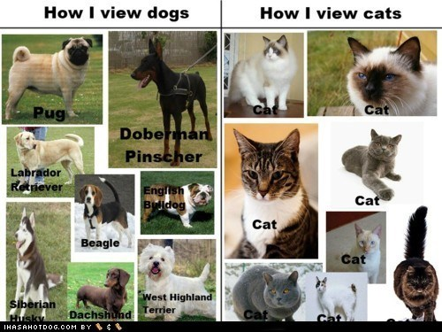 accurate beagle bulldog cat dachshund doberman how i view cats how i view dogs husky labrador retriever pug west highland white terrier - 5531286784