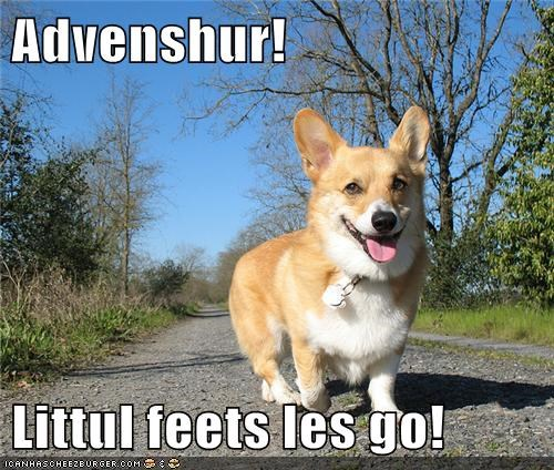 adventure corgi happy dog smile smiling Travel traveling - 5531355392