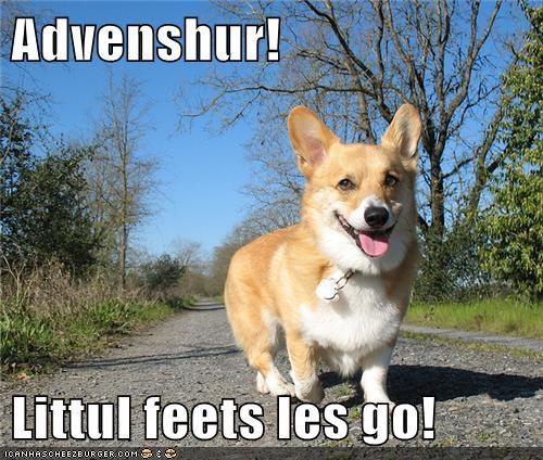 adventure corgi happy dog smile smiling Travel traveling - 5531355392