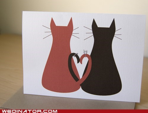 card Cats funny wedding photos Hall of Fame invite kittehs kitties rings Wedding Invitation - 5531768064