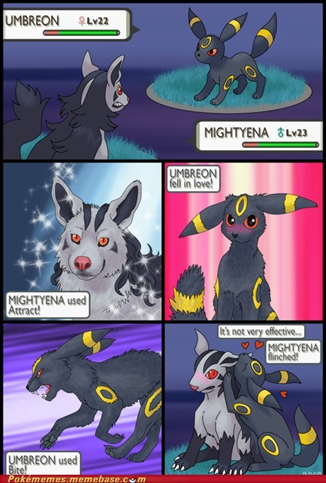 attract,best of week,comic,cute,endures,mightyena,umbreon