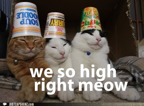 Cats,drugs,high,I Can Has Cheezburger,meow,stoned