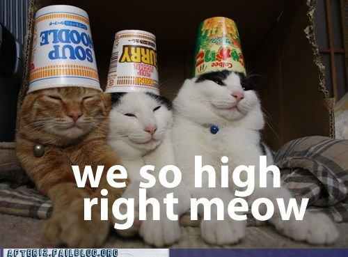 after 12 Cats crunk critters drugs g rated hats high ramen - 5532120832