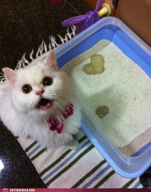 cat ladies need love too Cats dating daww forever alone g rated heart kitty litter box true love We Are Dating - 5532214528