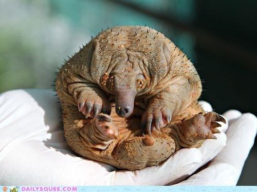baby,creepicute,echidna,itty bitty,newborn,poll,puggle