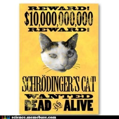 alive and cat dead physics shrödinger wanted - 5533971712