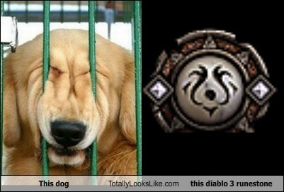 animal,dogs,funny,game diablo iii,TLL