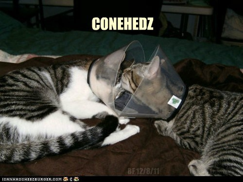 CONE HED KITTEHZ