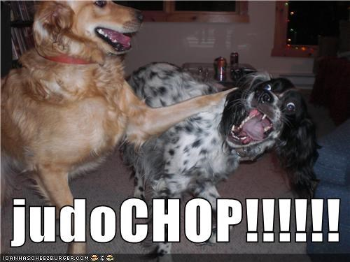 animals best of week derp dogs goggies judo chop - 5534249472