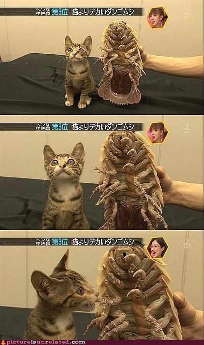 cat,nom,wtf